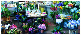 Mockingbird Florist Dallas, fine flowers, gifts and event designs in Dallas, Texas.