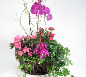 Orchid Garden Basket from Mockingbird Florist in Dallas, TX