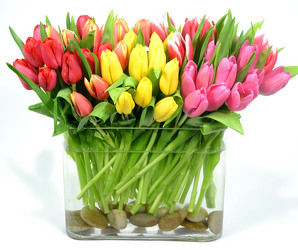 Holland Tulips by Fifty  from Mockingbird Florist in Dallas, TX