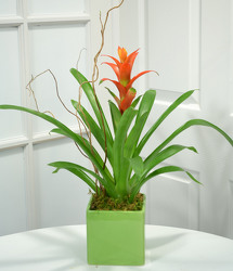 Bromeliad Desk Planter from Mockingbird Florist in Dallas, TX