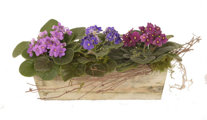 Premium Violet Planter from Mockingbird Florist in Dallas, TX