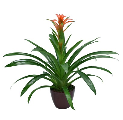 Bromeliad from Mockingbird Florist in Dallas, TX