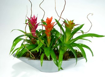 Contemporary Bromeliad Planter from Mockingbird Florist in Dallas, TX
