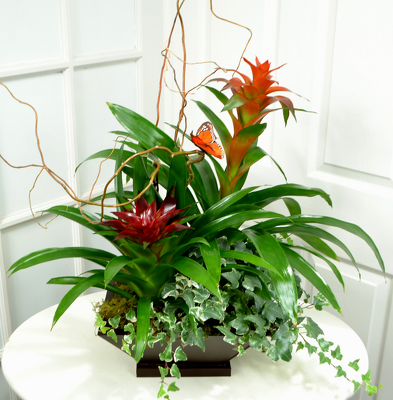 Double Bromeliad  Planter from Mockingbird Florist in Dallas, TX