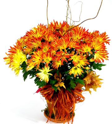 Fall Mums The Word from Mockingbird Florist in Dallas, TX