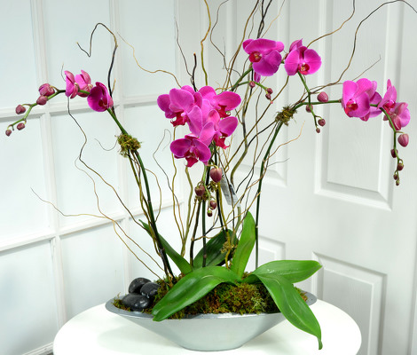Phalaenopsis Orchid Garden White or Lavender Int. Special from Mockingbird Florist in Dallas, TX