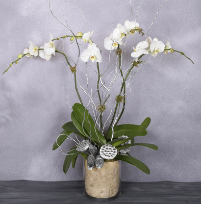 Holiday Orchid Garden from Mockingbird Florist in Dallas, TX