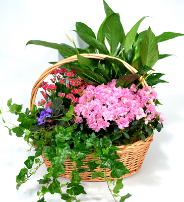 Large Garden Basket from Mockingbird Florist in Dallas, TX