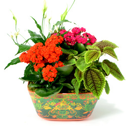 Dallas delivery of Plants, planter baskets, blooming plants and more