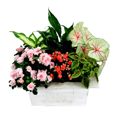 Florist in Dallas Best Flowers & Roses Arrangements Delivery