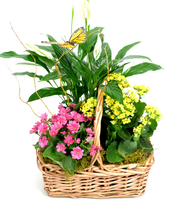 Garden Basket    from Mockingbird Florist in Dallas, TX
