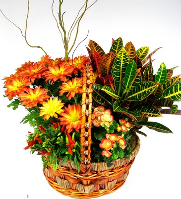 Golden Glory Large Garden Basket from Mockingbird Florist in Dallas, TX