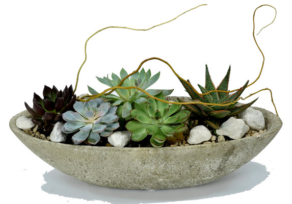 Succulent Garden Planter  from Mockingbird Florist in Dallas, TX
