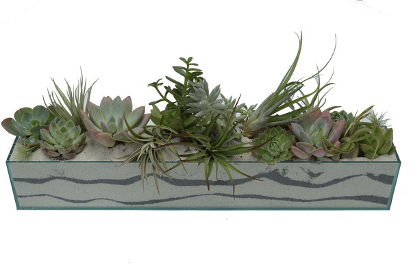 "Seascape Assorted Succulent Design 24"" from Mockingbird Florist in Dallas, TX"