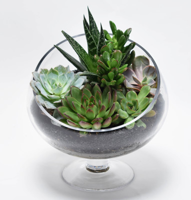 Succulent Garden In Glass from Mockingbird Florist in Dallas, TX