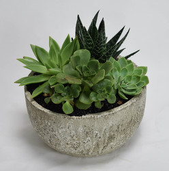 Succulent in Stone Garden from Mockingbird Florist in Dallas, TX