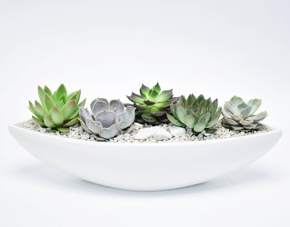 Succulent Garden in White from Mockingbird Florist in Dallas, TX