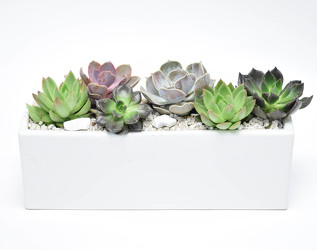 Contemporary Succulent Planter  from Mockingbird Florist in Dallas, TX