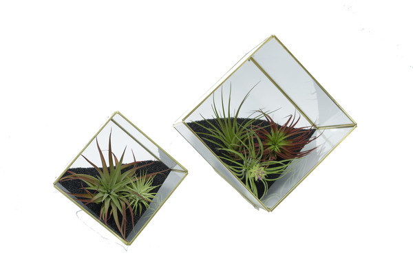 Tillandsia Air Plant Geometric Garden from Mockingbird Florist in Dallas, TX