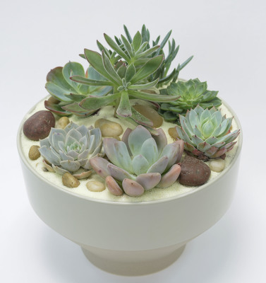 Succulent Garden in Grey Tapered Bowl from Mockingbird Florist in Dallas, TX