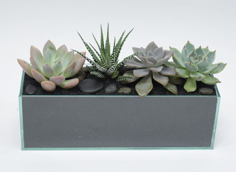 Assorted Succulent Garden in 12