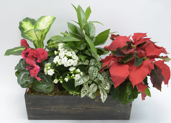 Large Holiday planter from Mockingbird Florist in Dallas, TX