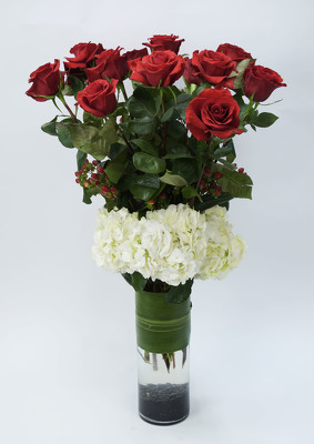 Exquisite 12 Red Roses & Hydrangea Wow! from Mockingbird Florist in Dallas, TX