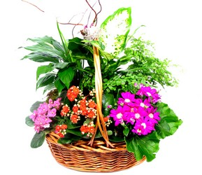 Mother's Day Plants from your Dallas Florist, Mockingbird Florist