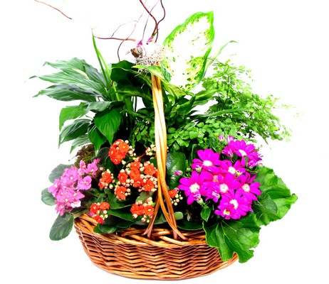 Summer Garden Plant Basket  from Mockingbird Florist in Dallas, TX